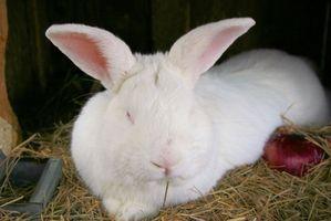 Cómo criar gusanos Bajo jaulas de los conejos
