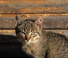 Cómo mantener a un gato de debajo de una cubierta