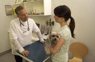 Cómo saber si un perro tiene parásitos de la piel