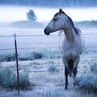 El estanozolol el uso de esteroides en un caballo