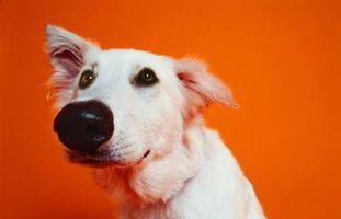 Suelo de goma para el entrenamiento del perro