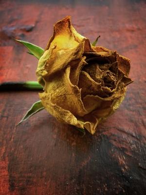 Cómo secar una rosa mosqueta