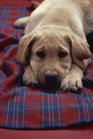 Remedios caseros para cachorros con piel seca