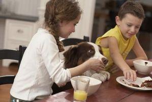 Niveles de chocolate peligrosos para los perros