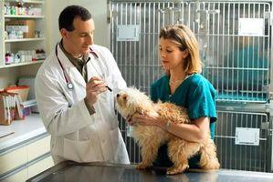 Los signos de lesiones internas de un perro