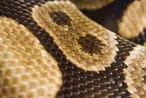 Las serpientes en el sur de Louisiana