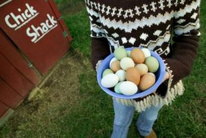 ¿Cómo consigo el olor de nuestra granja huevos?