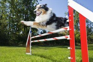 Tipos de superficies para la agilidad del perro