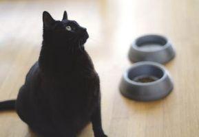 Estimulante del apetito natural para gatos