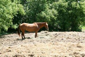 Cómo cuidar a un caballo solitario