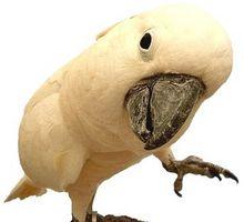 Información de aves de compañía