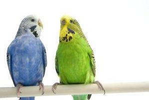 Cómo combinar dos jaulas de aves