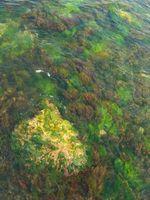 Tipos comunes de algas