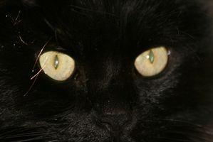 ¿Por qué los gatos ojos brillan en la oscuridad?