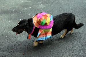 Cómo hacer sombreros para un perro
