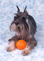 La homeopatía para las alergias de la piel canina
