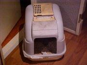Cómo tratar la diarrea en los gatos con un remedio casero