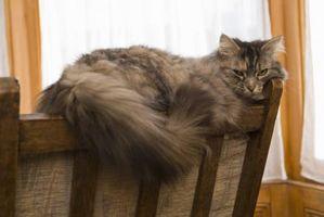 Cómo limpiar un gato con la Diarrea