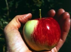 Lista de especies de árboles frutales