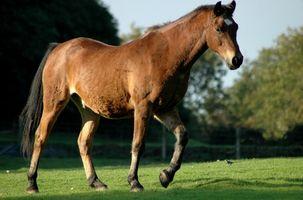 Cómo ayudar con la piel que pica en un caballo