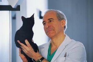 Signos y síntomas de la rabia en Housecats