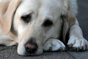 Cómo limpiar los accidentes de mascotas en la alfombra