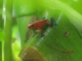 Diferentes tipos de ranas en la selva