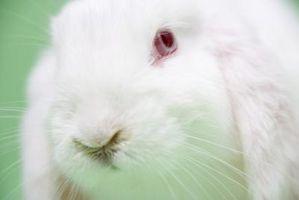 Alivio temporal de los problemas respiratorios en los conejos