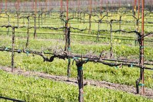 Recorridos por el país del vino en Napa Valley