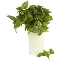 Los condimentos de hierbas y sus usos