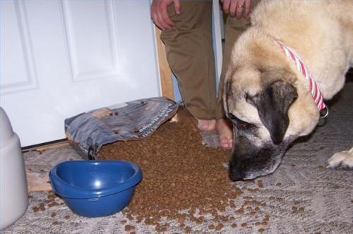 ¿Qué tipos de alimentos para perros son malos para los perros?