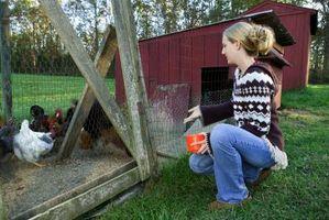 Las malas hierbas venenosas a los pollos