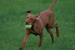 Como dosis de glucosamina para perros