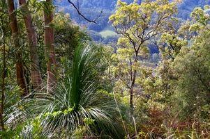 Australian Bush alimentos nativos