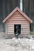 Cómo hacer una casa de perro de una sola hoja de madera