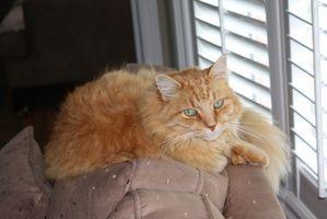 ¿Cómo deshacerse del pelo del gato en los muebles