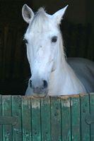 Hoteles más cercanos a caballo Laughlin, Nevada