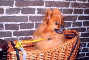 Los perros Pomerania y niños