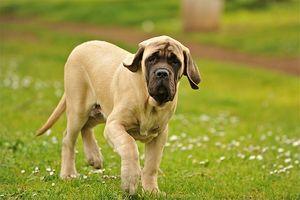 El azufre para problemas de la piel canina