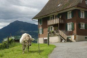 Comer y beber en Suiza