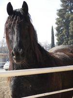 Información básica del caballo