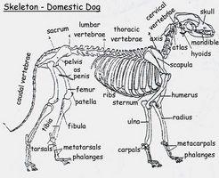 Acerca de lesiones del cuello en los perros