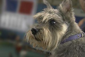 Escuelas de Formación del perro en Iowa
