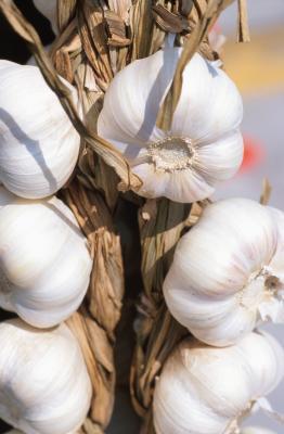 Las especias que van con espárragos y risotto de hongos