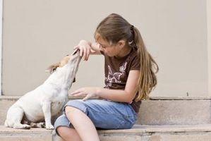 Los efectos de las plantas venenosas de Salud Canina