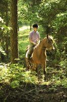 Lo botas son las mejores para los caballos Pista de equitación?