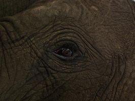 Formas en las que las especies en peligro de extinción se conservan