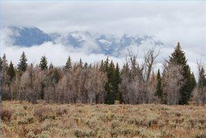 Actividades en el Parque Nacional Grand Teton