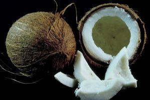 ¿Qué significa si un coco huele como el alcohol?