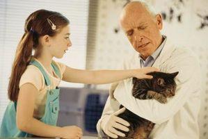La medicación lombriz intestinal de los gatos
